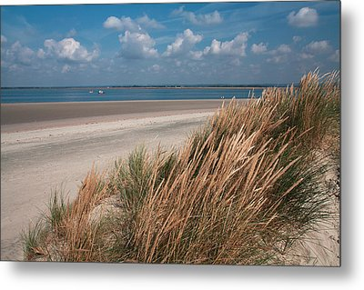 Golden Grasses Metal Print by Shirley Mitchell