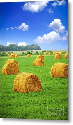 Golden Hay Bales In Green Field Metal Print by Elena Elisseeva