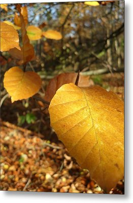 Golden Leaves Metal Print by Michael Standen Smith