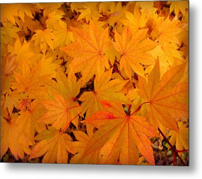 Metal Print featuring the photograph Golden Leaves Of Maple by Cindy Wright