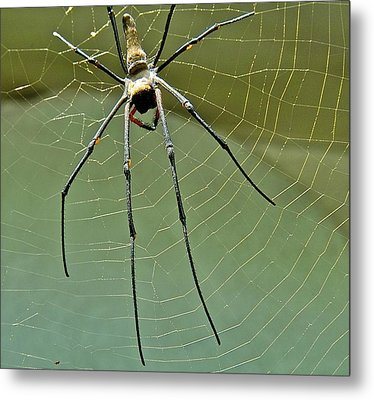 Golden Orb Spider Metal Print by Jocelyn Kahawai