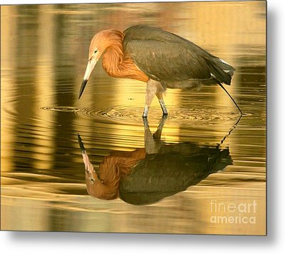 Metal Print featuring the photograph Golden Reflection by Myrna Bradshaw