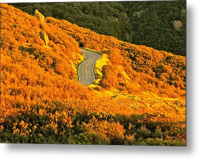 Golden Road Metal Print by Michael Cinnamond