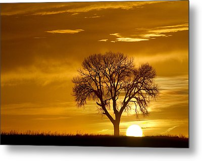 Golden Sunrise Silhouette Metal Print by James BO  Insogna