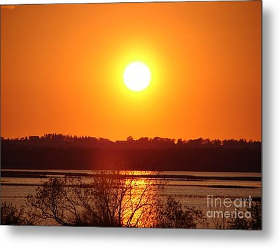 Golden Sunset Metal Print by Ronald Tseng