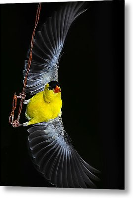 Metal Print featuring the photograph Goldfinch High Wire Act by Randall Branham