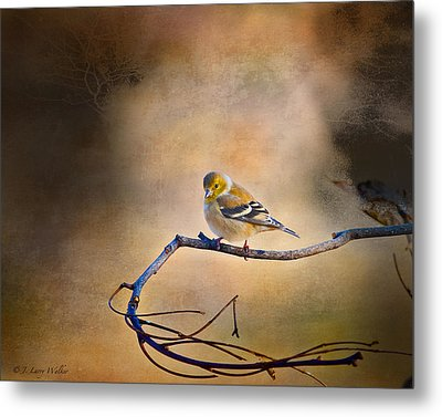 Goldfinch In Deep Thought Metal Print by J Larry Walker
