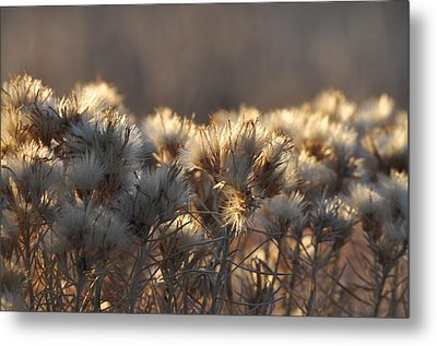 Metal Print featuring the photograph Gone To Seed by Fran Riley