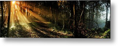 Metal Print featuring the photograph Good Morning by John Chivers
