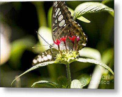 Graceful Metal Print by Leslie Leda