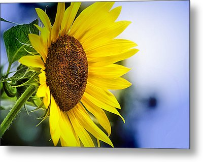 Graceful Sunflower Metal Print by Trudy Wilkerson