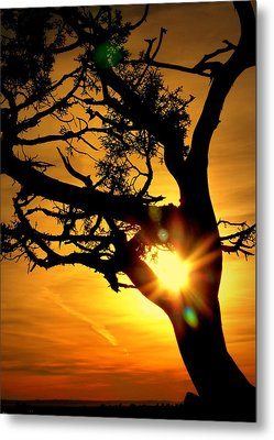 Grand Canyon Sunset Metal Print by Cindy Wright