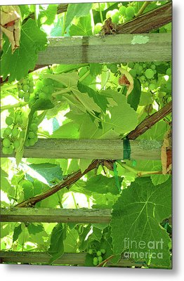 Grape Arbor Metal Print by Methune Hively