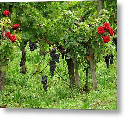 Grape Vines And Roses I Metal Print by Greg Matchick