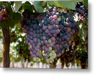 Grapes Bunch Metal Print by Johnson Moya