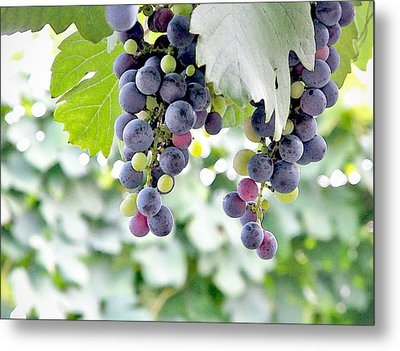 Grapes On The Vine Metal Print by Glennis Siverson