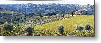 Grapevines And Olive Trees Metal Print by Jeremy Woodhouse