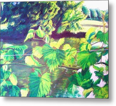 Grapevines Toledo Botanical Gardens Metal Print by Samuel McMullen