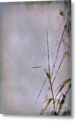 Grass And Wall Metal Print by Judi Bagwell