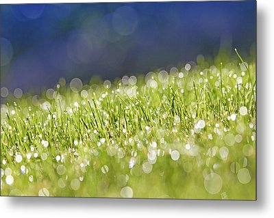 Grass, Close-up Metal Print by Tony Cordoza