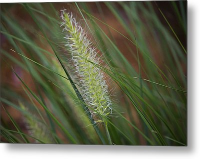 Grass In The Wind Metal Print