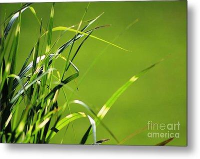 Grass Is Always Greener Metal Print