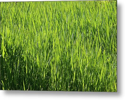Metal Print featuring the photograph Grass by Jerry Cahill