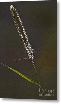 Grass Spikelet Metal Print by Heiko Koehrer-Wagner