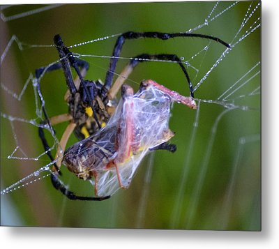 Grasshopper And Spider Metal Print by Brian Stevens