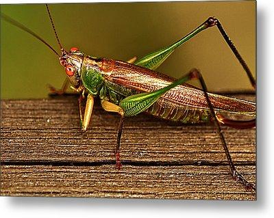Grasshopper Metal Print by Linda Tiepelman