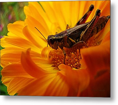 Grasshopper Luncheon Metal Print