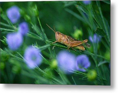 Grasshopper Metal Print by Mike Grandmailson