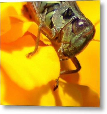 Grasshopper On Yellow Metal Print by Maureen  McDonald