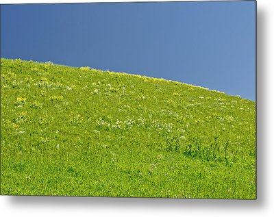 Grassy Slope View Metal Print by Roderick Bley