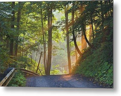 Gravel Road At Sunrise, Pelham, Ontario Metal Print by Darwin Wiggett