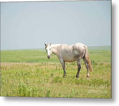 Gray On Prairie Metal Print