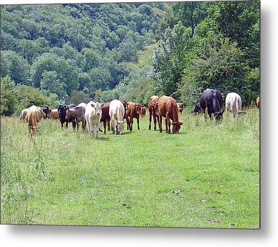 Grazing Party Metal Print