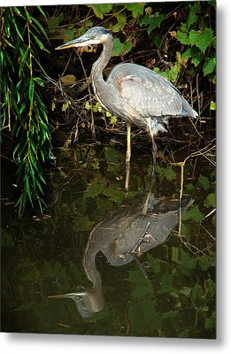Metal Print featuring the mixed media Great Blue Heron 1 by Bruce Ritchie