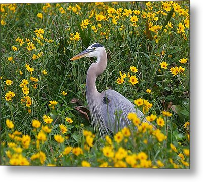Metal Print featuring the photograph Great Blue Heron In The Flowers by Myrna Bradshaw