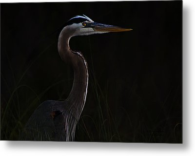 Great Blue Heron In The Sea Oats Metal Print by Dorothy Cunningham