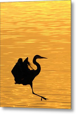 Metal Print featuring the photograph Great Blue Heron Landing In Golden Light by Randall Branham