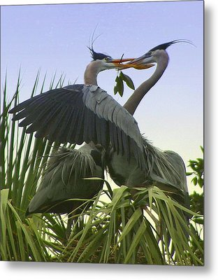 Metal Print featuring the photograph Great Blue Herons by Myrna Bradshaw