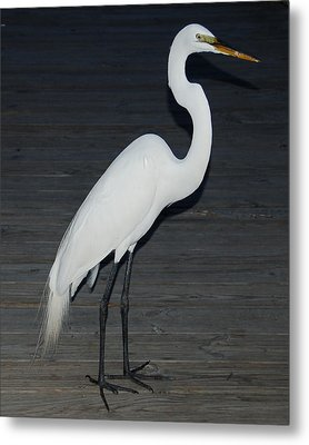 Snowy Egret Metal Print by Aimee L Maher Photography and Art Visit ALMGallerydotcom