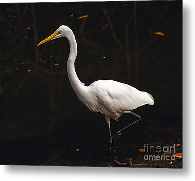 Great Egret Hunting Metal Print by Art Whitton