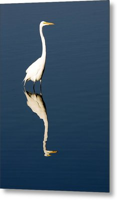 Great Egret Reflected Metal Print by Sally Weigand