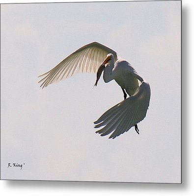 Great Egret Successful Fishing Metal Print