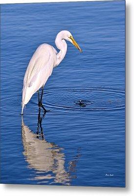 Great Egret With Shrimp Metal Print