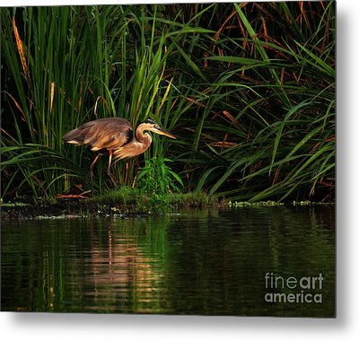 Metal Print featuring the photograph Great Heron by Deborah Smith