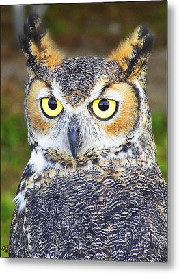 Great Horned Owl Metal Print by Barbara Middleton