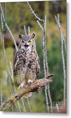 Great Horned Owl Metal Print by Donna Greene